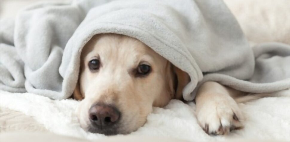 donate old blankets to animal shelters